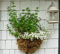 Flower basket, Josie Byington
