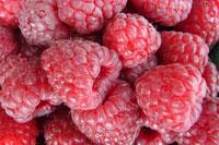 Raspberries, Marcella Andrews, Qualicum Beach