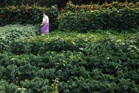 Trish Summerhayes in her garden